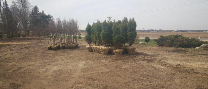 Arbor Vista Nursery